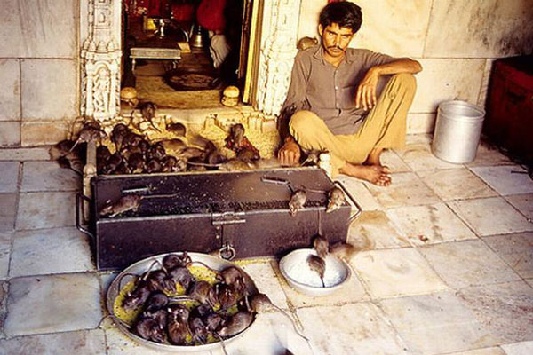 Karni_Mata_templom_cxdq.com