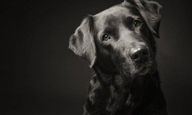 10 spirituális tanítás, amit a kutyámtól tanultam