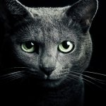10 spirituális tanítás, amit a macskámtól kaptam