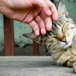 A macska dorombolásának gyógyító ereje