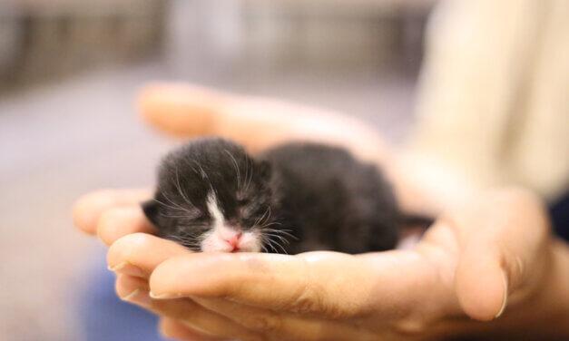 Macskakínzás, hajléktalanrugdosás, sünégetés: súlyos probléma a gyerekeknél az érzelmi intelligenciahiány